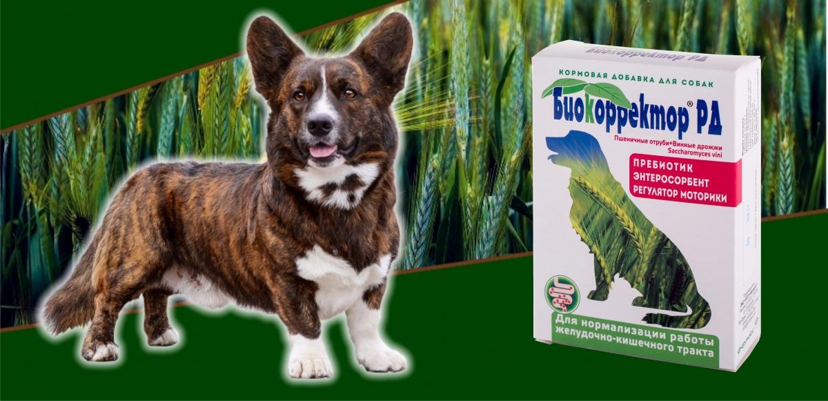 Биокорректор РД для собак