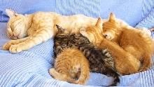 Кормление кошки в период лактации