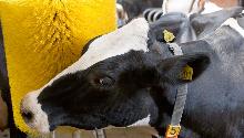 Основы ухода за сельскохозяйственными животными