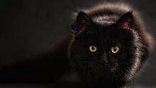 Кошка ночью
