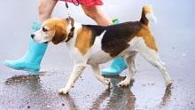Каким должен быть уход за животными в городской среде