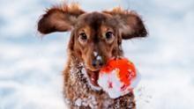 Уход за лапами собак во время и после прогулки