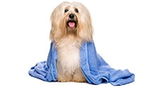 Как помыть животное, когда нет воды?