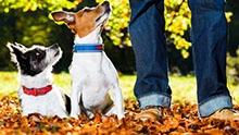 Как часто нужно выгуливать собаку?
