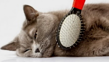 вычесывание кошки