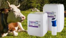 Гигиена вымени коров