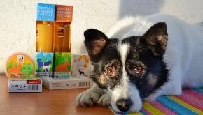 Проект «Собака в помощь»