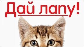 Нашей группе ВКонтакте 1 год