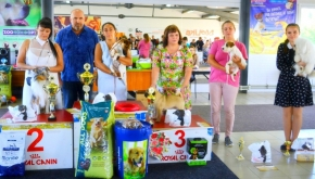 Regional Certification dog show of all breeds at Kirov city.